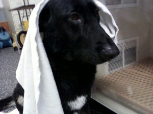 Towel_dry