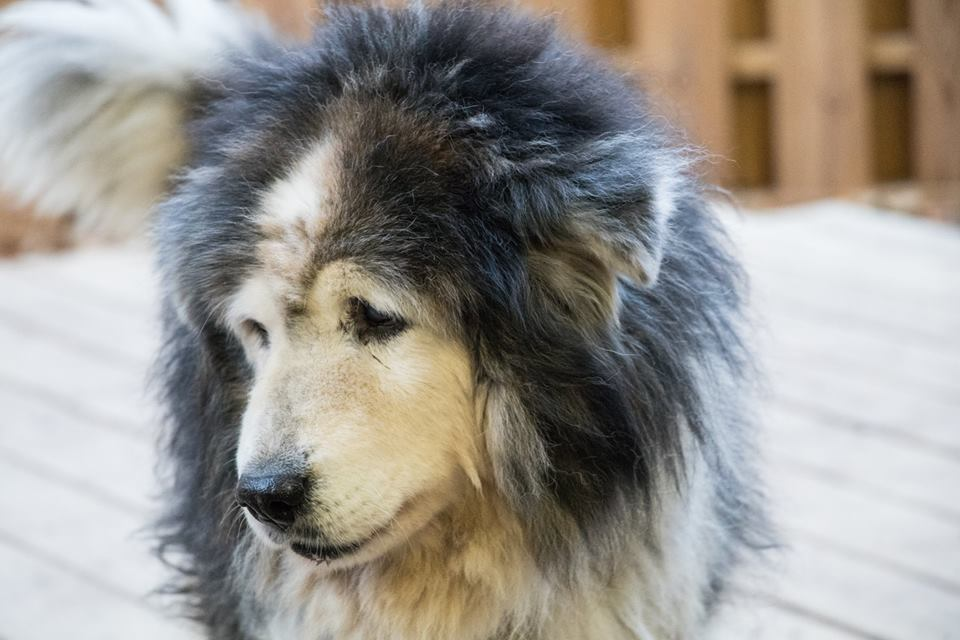 Leo is the star at the Old Friends Senior Dog Sanctuary in Tennessee.